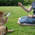 puppy-trainer in action